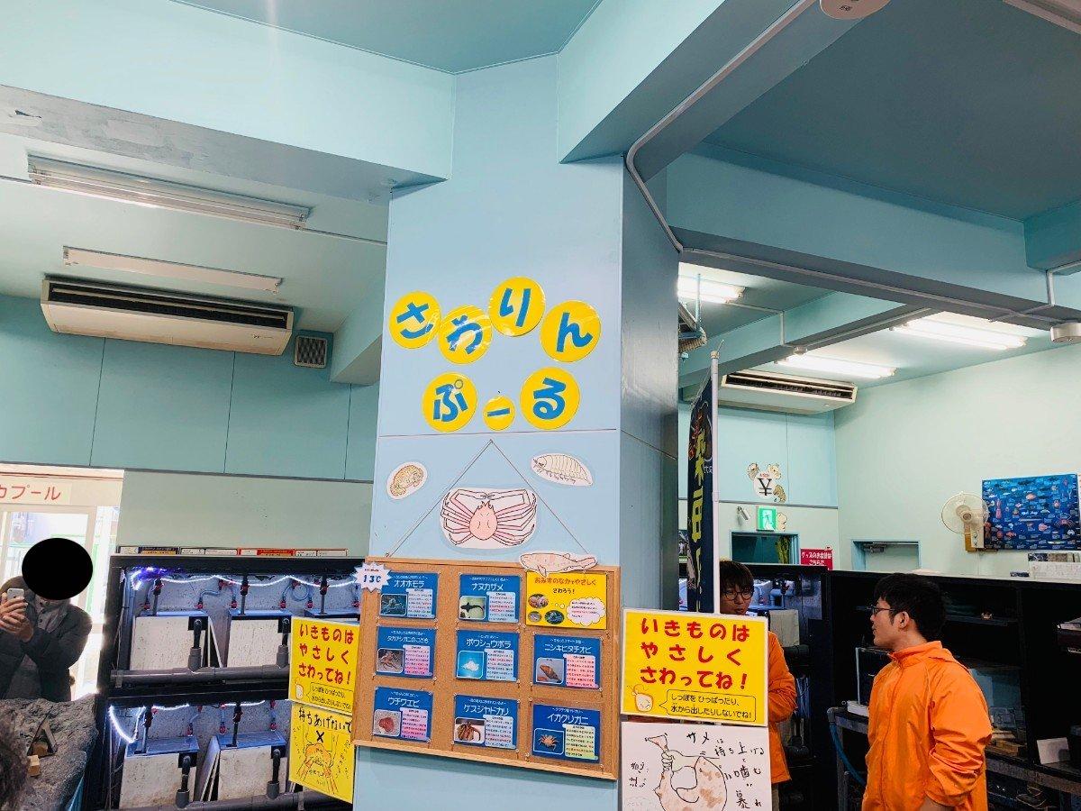 竹島水族館のさわりんプール